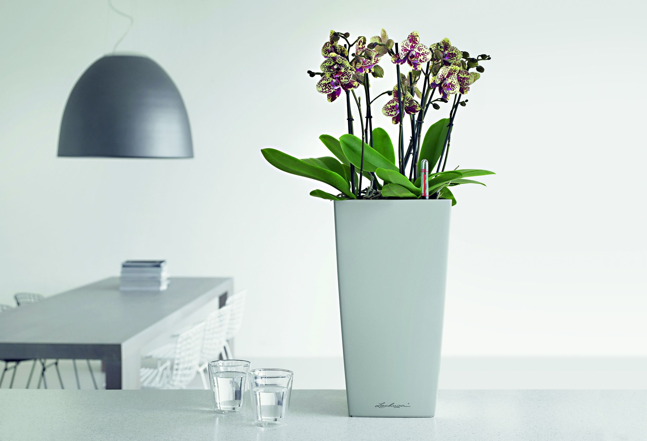 Cubico 22 silver on tabletop with_Phalaenopsis.jpg