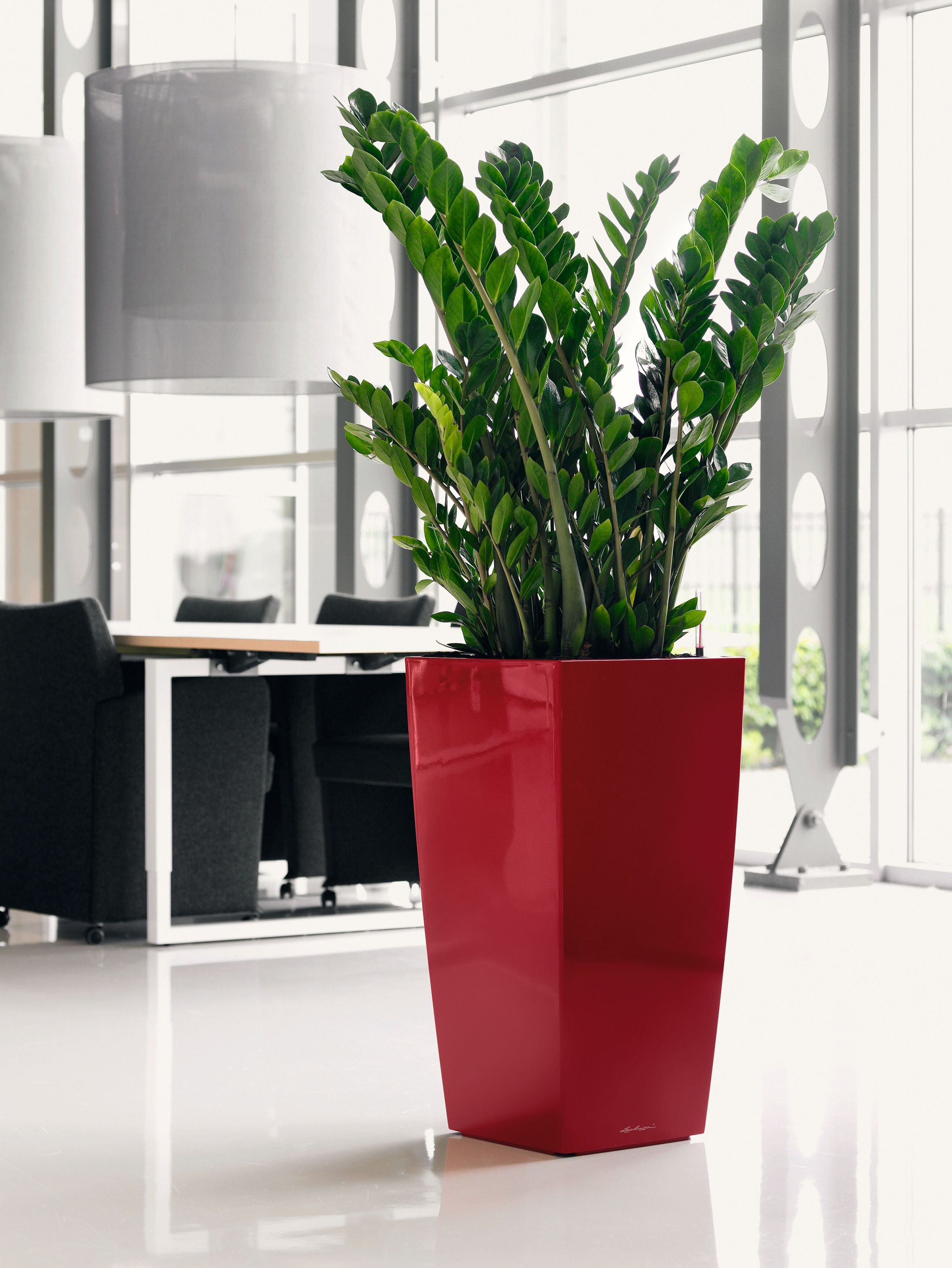 Cubico 50 Red with zz plant.jpg