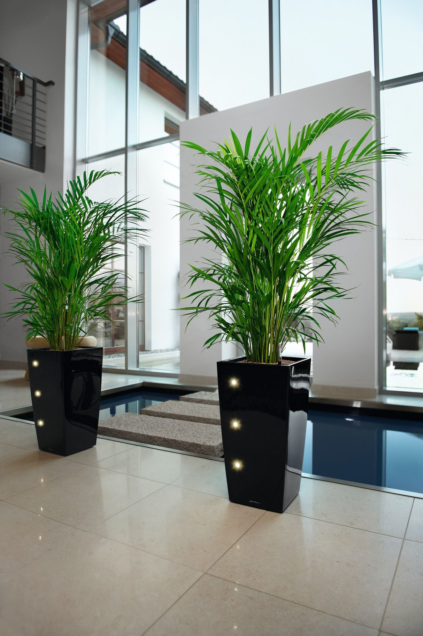 Cubico Black LED with_Chrysalidocarpus.jpg