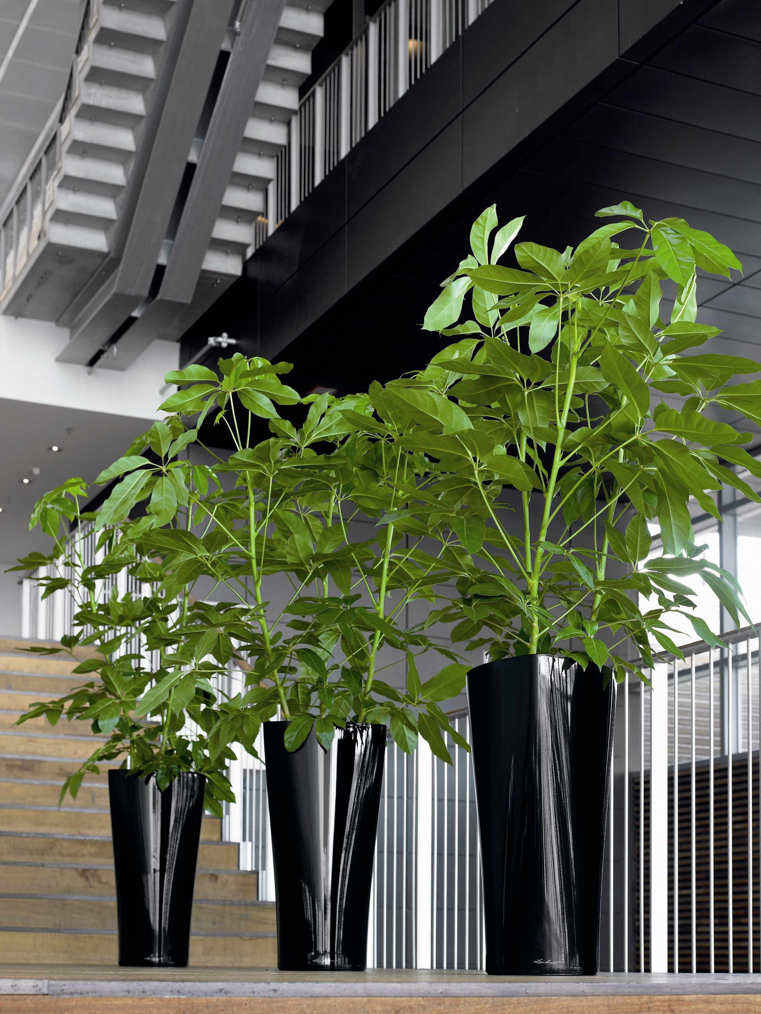 Delta 40 Black on staircase with Schefflera.jpg
