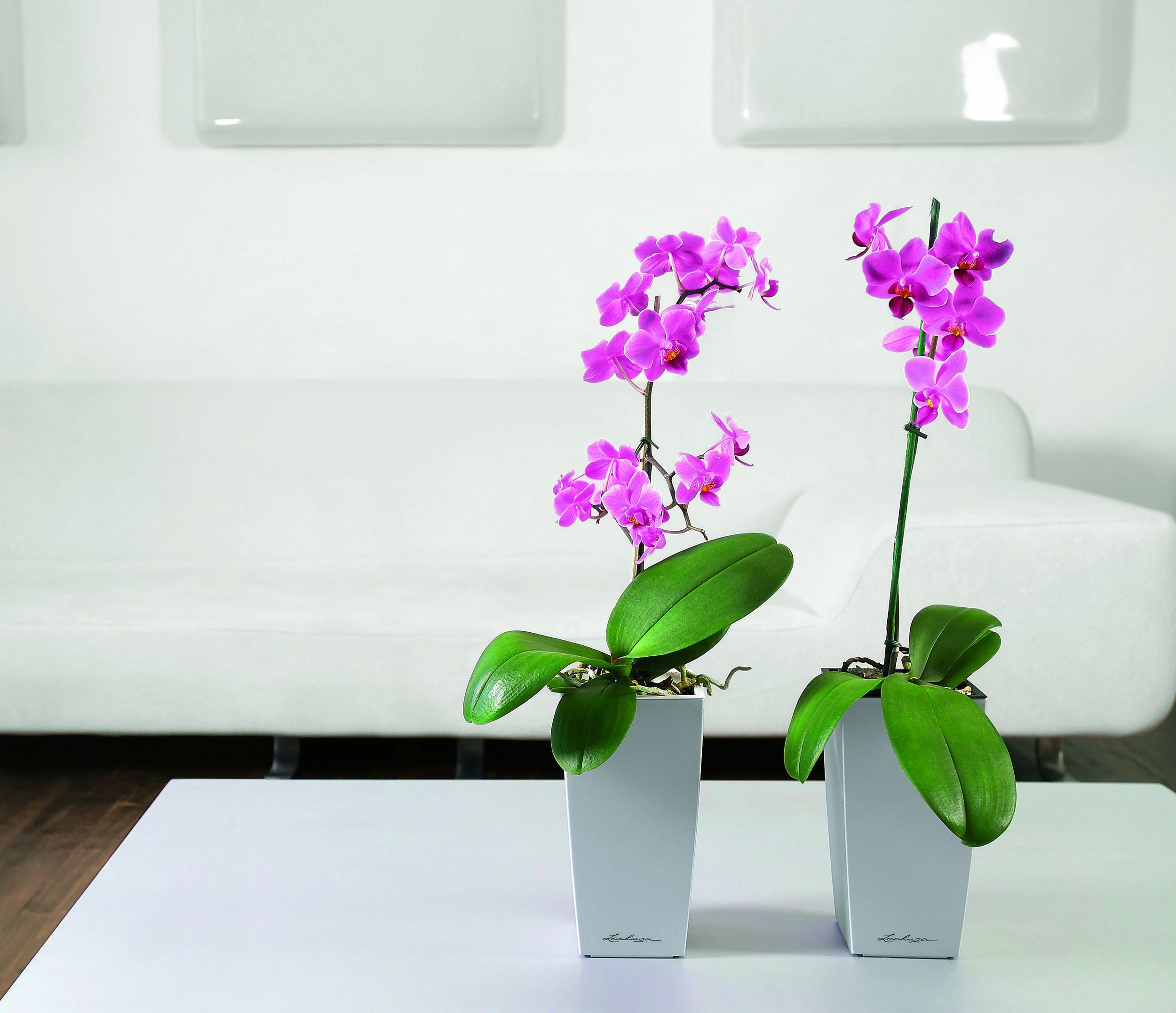 Mini-Cubi SiIver on table top with orchids.jpg