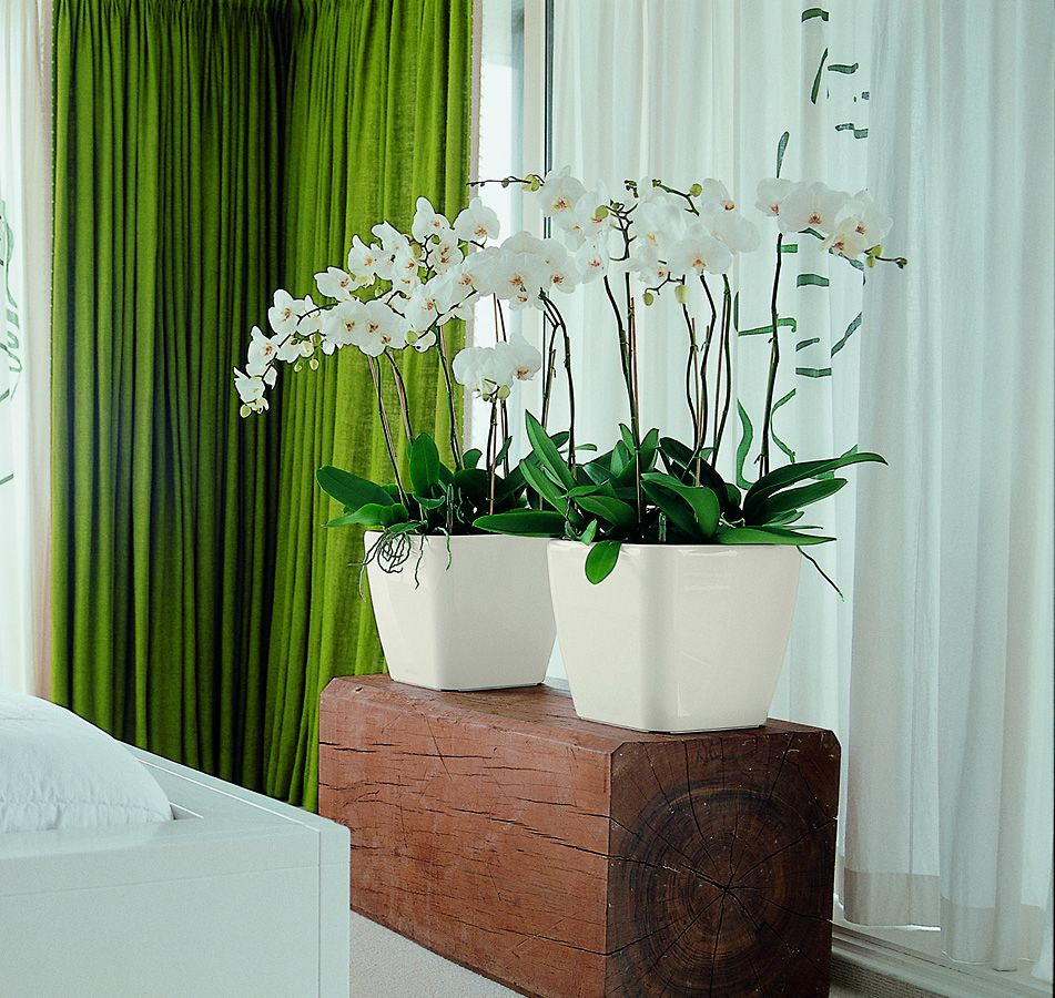 Quadro 21 White with orchids .jpg