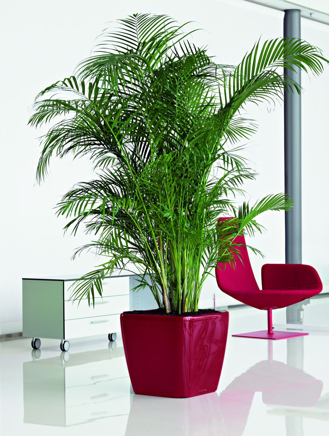 Quadro 43 Scarlet Red interior with palm.jpg