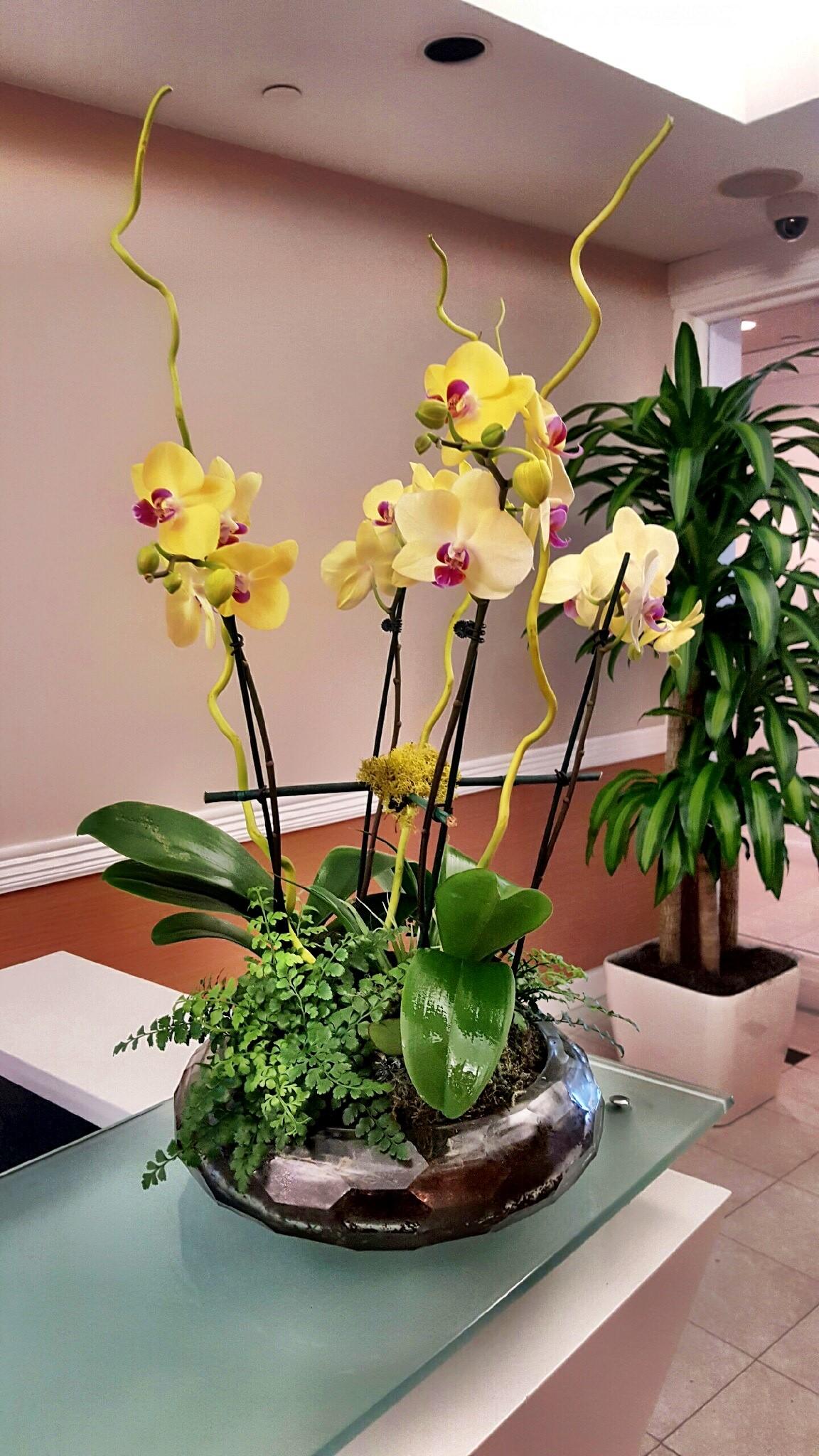 Orchid Arrangement.jpg