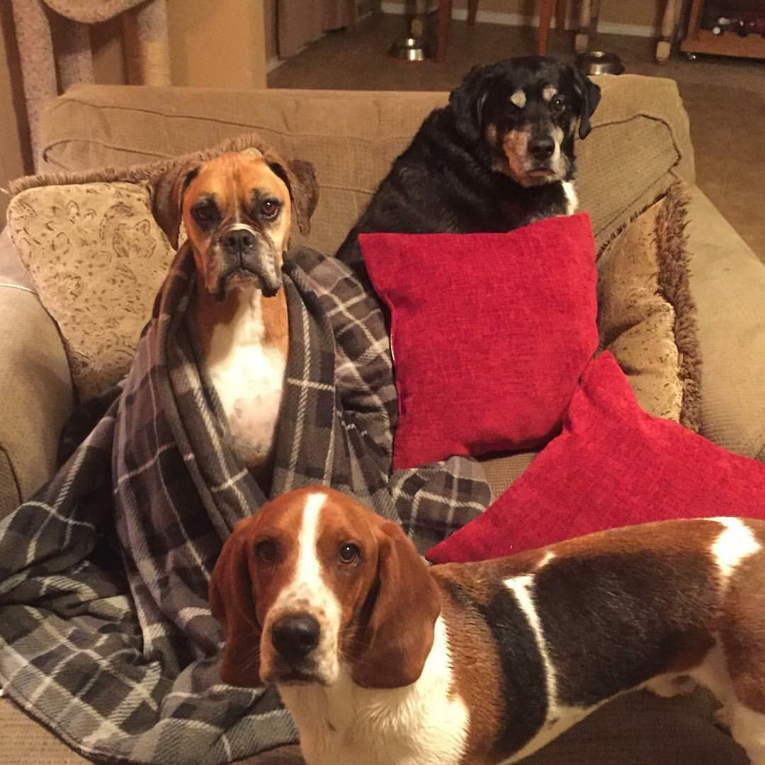 Roxy is wrapped in the plaid blanket and finally home with the rest of the family.