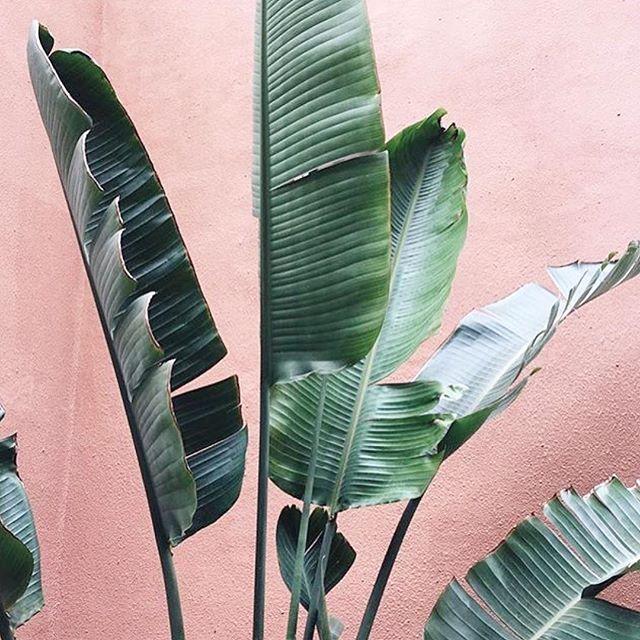 Keeping it Green. 🌱 #ecogirlbheavior #shopfarai 📷 @juliaadang @plantsonpink