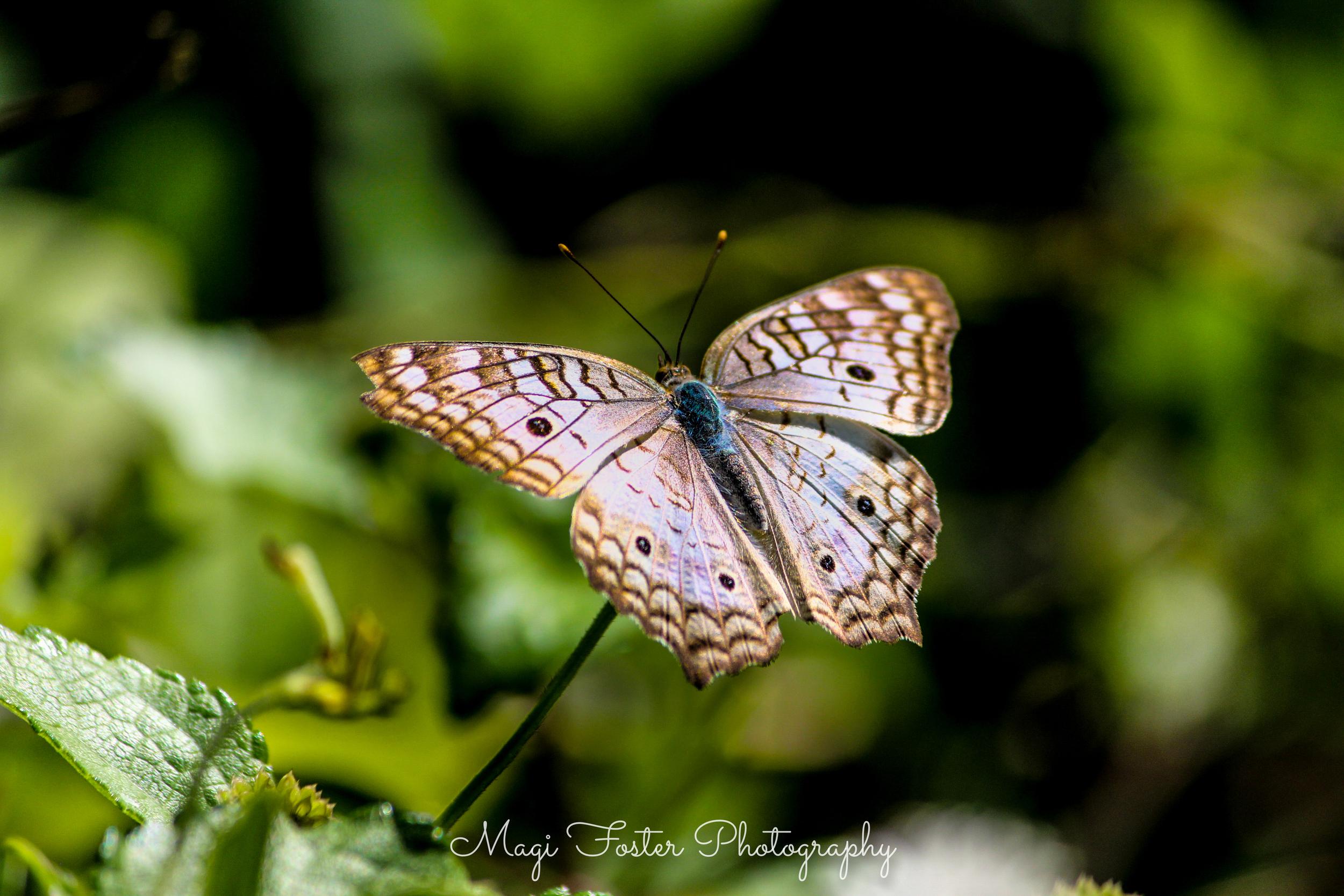 BVI_Moth-204.jpg