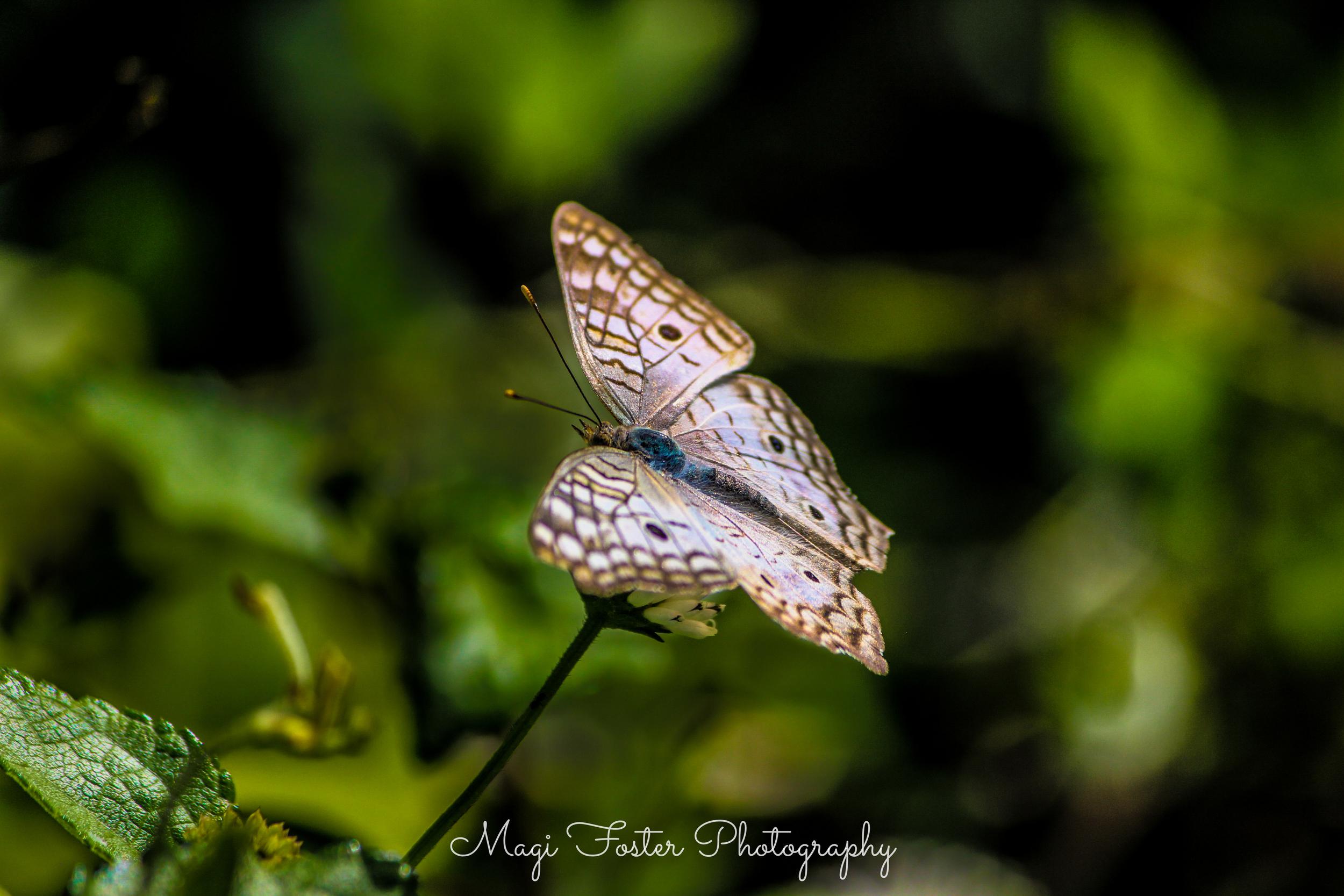 BVI_Moth-112.jpg