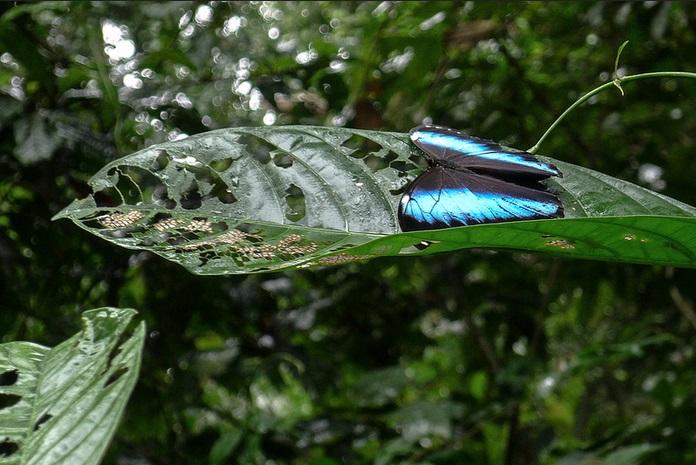 Biodiversity Inti Wara Yassi