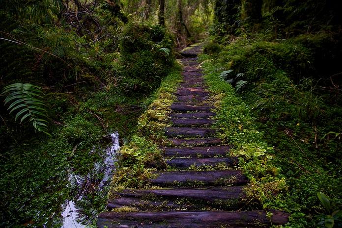Parque Pumalin landscapes; Pumalin Park nature