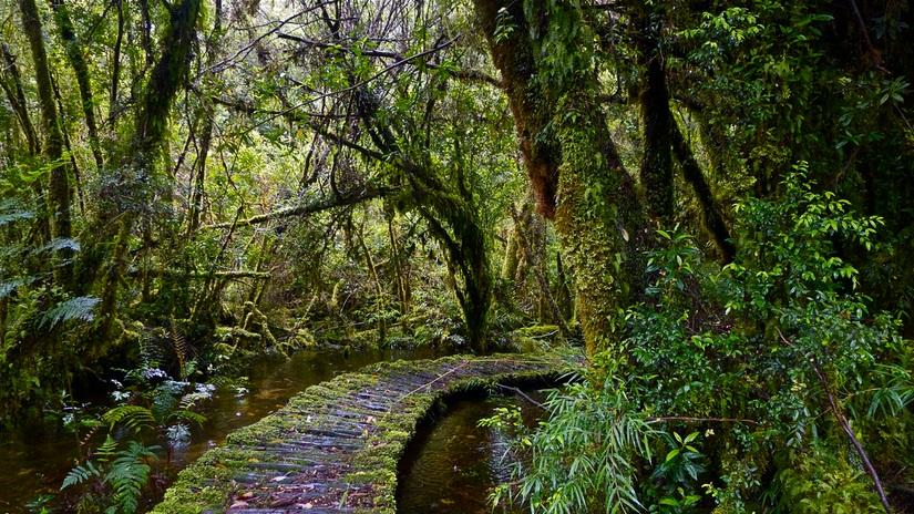Parque Pumalin nature; vegetation; Pumalin Park landscapes