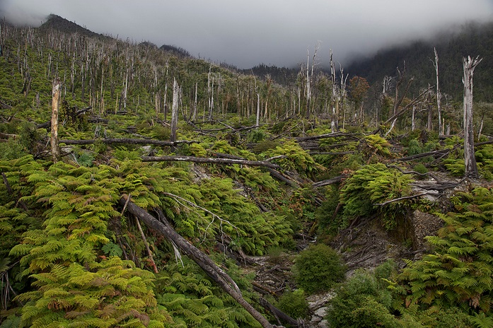 Chaiten Volcano hike, Pumalin; Pumalin landscapes, nature, volcano