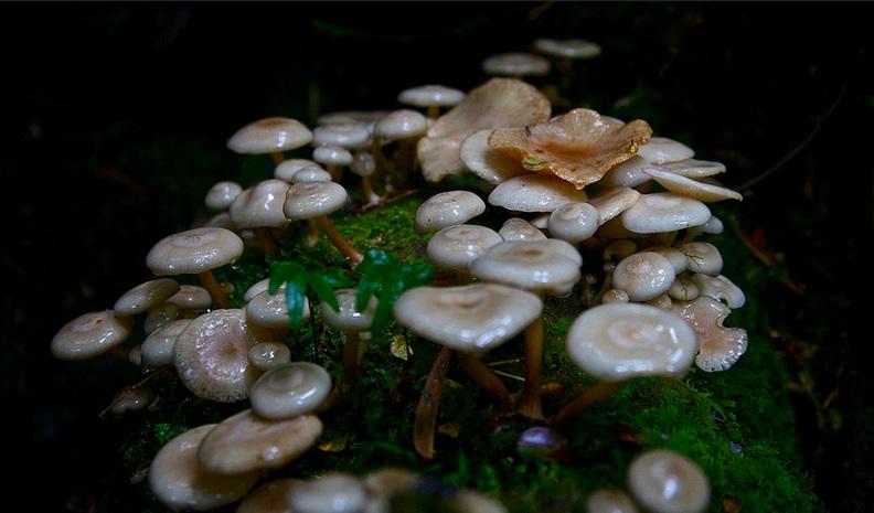 Mushrooms, Parque Pumalin, Chile; nature, biodiversity, rainforest