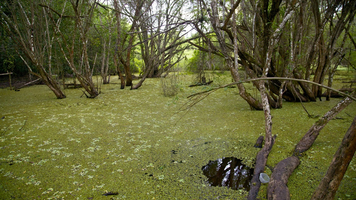 Swamps in the Guatemalan jungle; Guatemala nature, landscapes, rainforest
