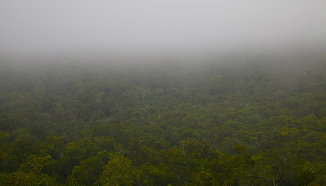 View of the rainforest from the top of the pyramid, El Mirador, Guatemala