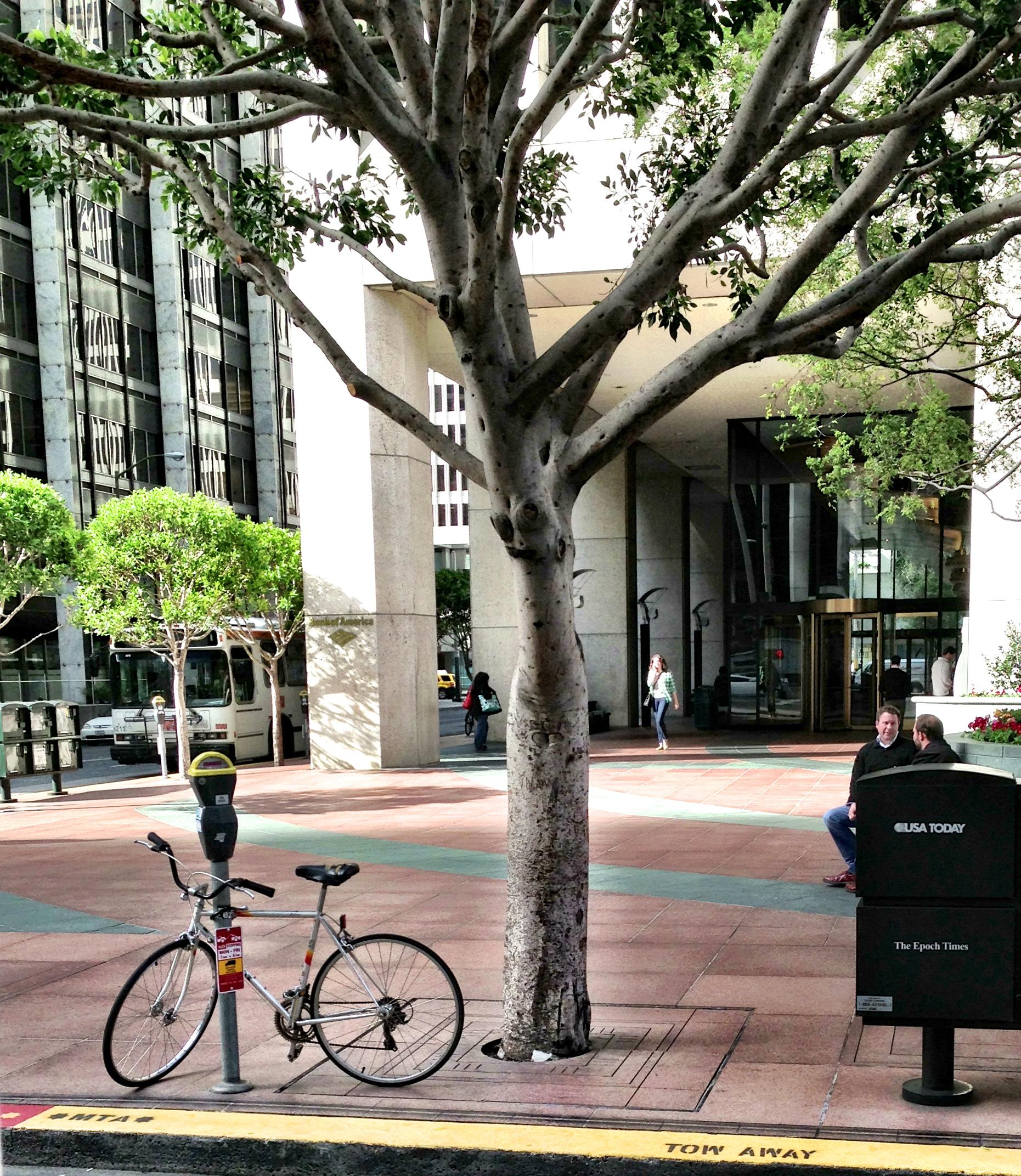 Bicycle SF