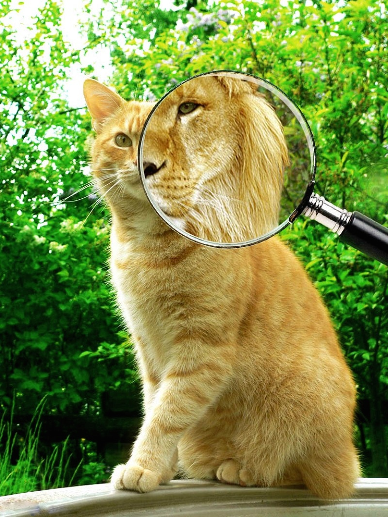 Magic Magnifying Glass Pics