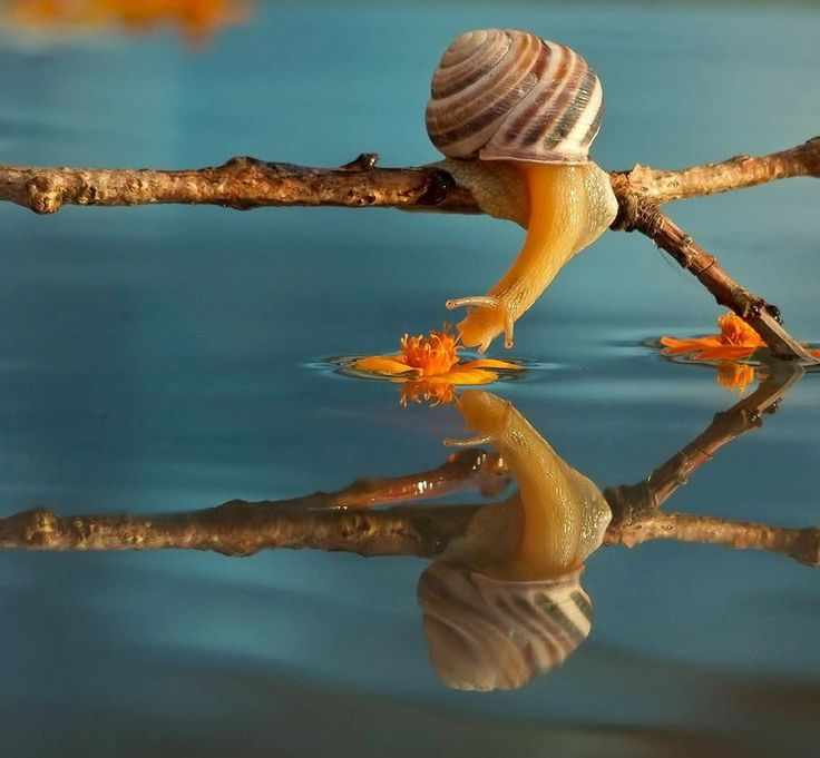 Snail over water