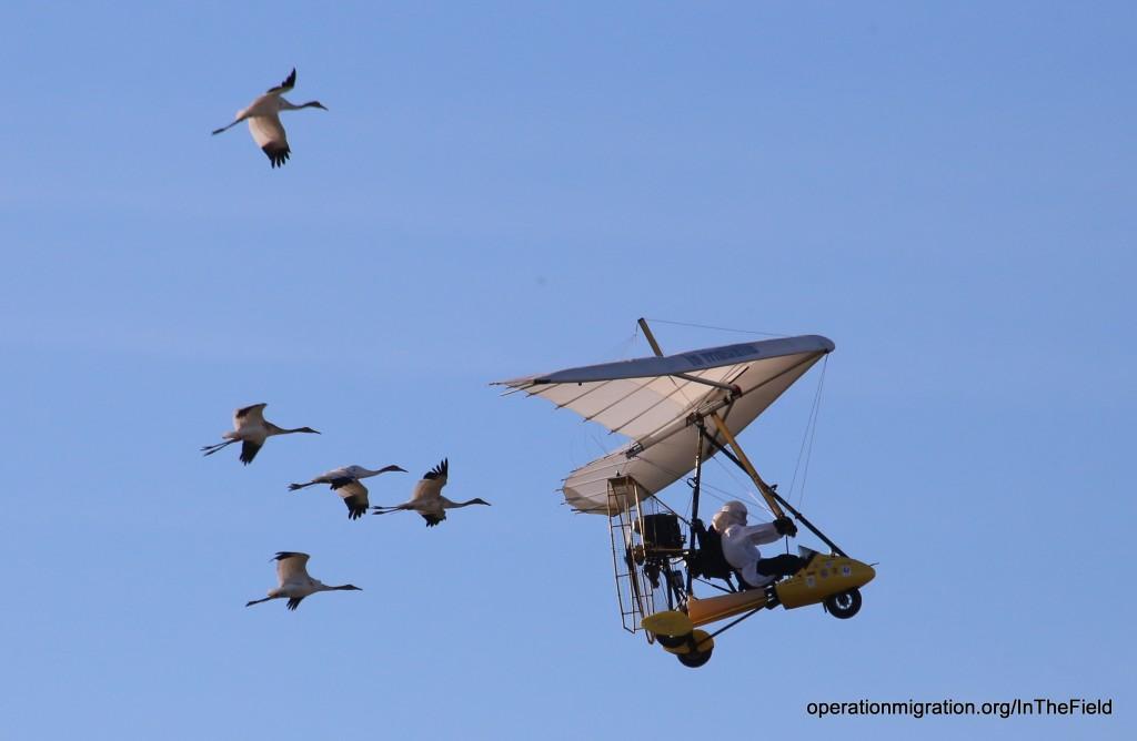 Operation Migration