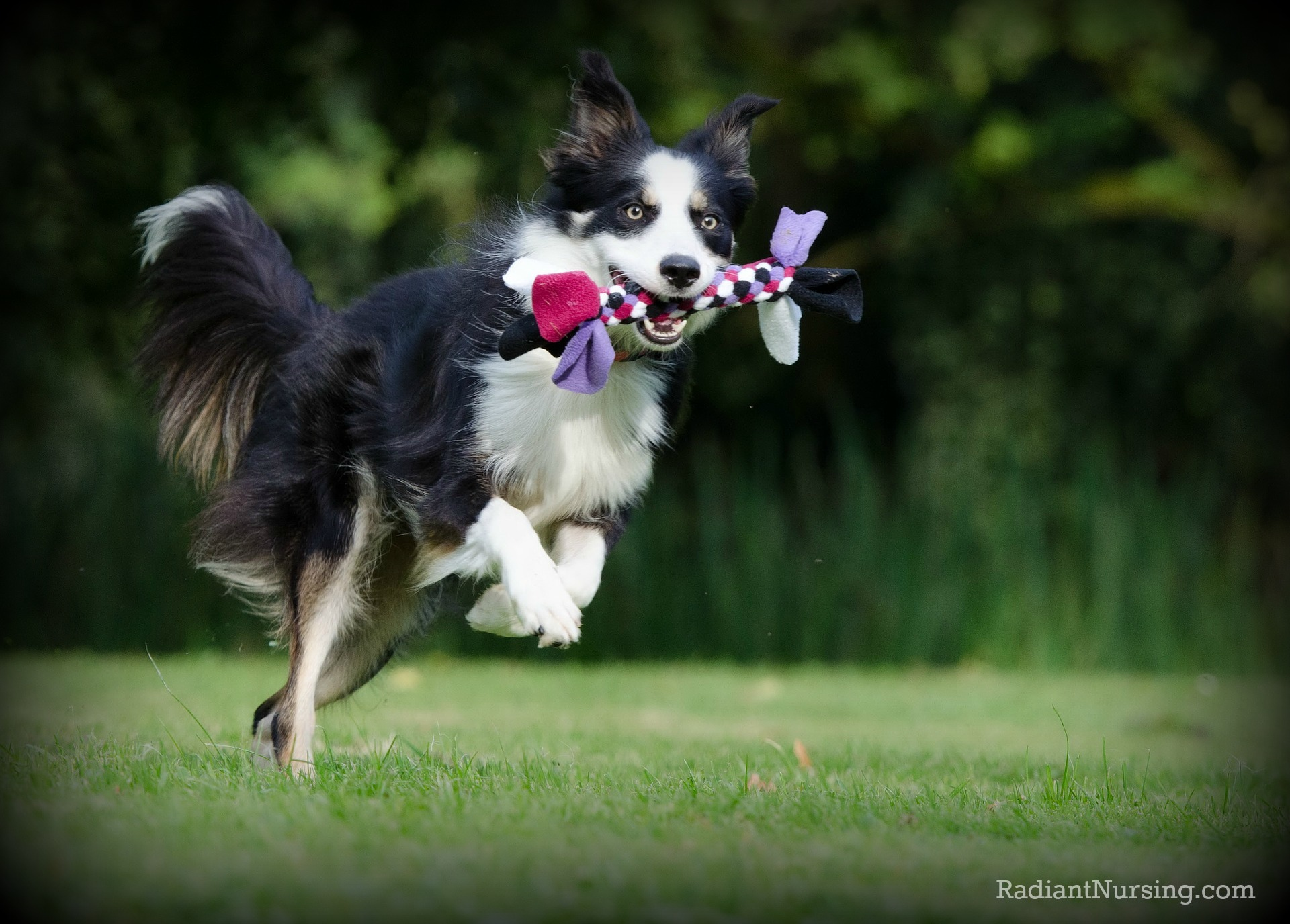 Play, enjoy, and create love with your pets.