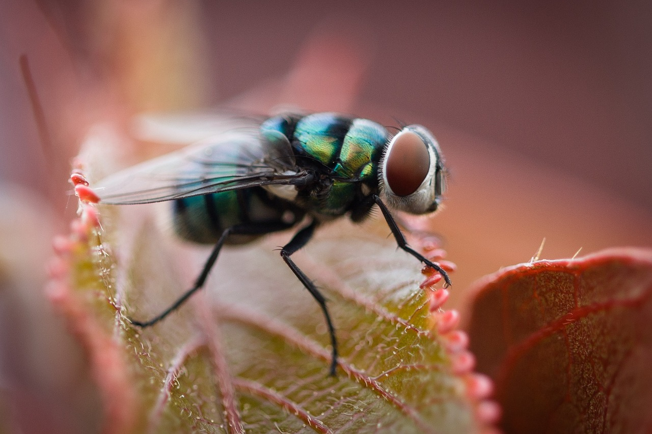 An iridescent fly. We don't like them landing on us so much.