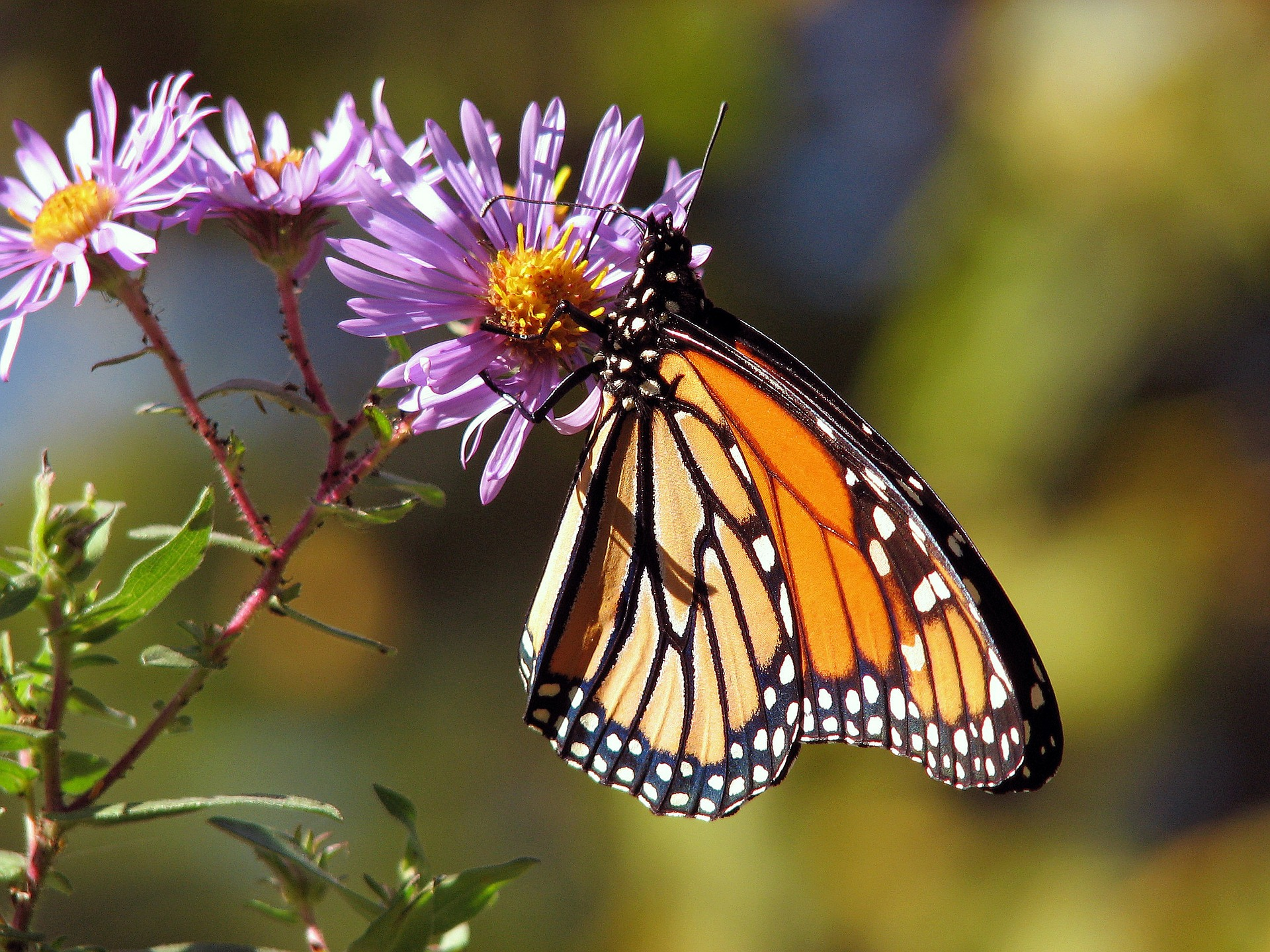 A butterfly on a flower, so pleasing to our eyes.