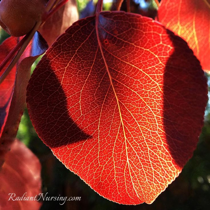 The red color of a leaf in autumn.