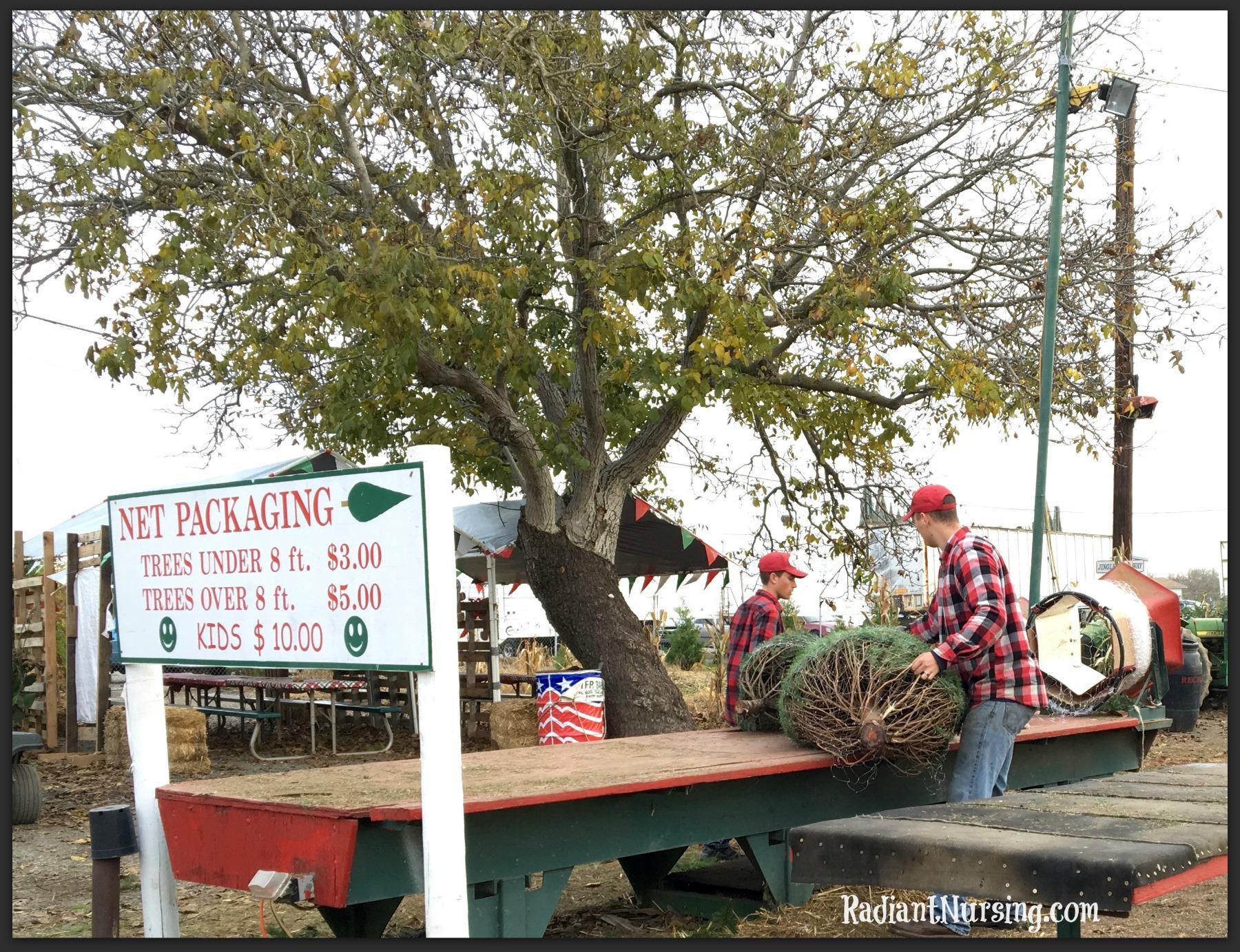 Net Packaging for Christmas trees. $10 for kids! Just kidding!