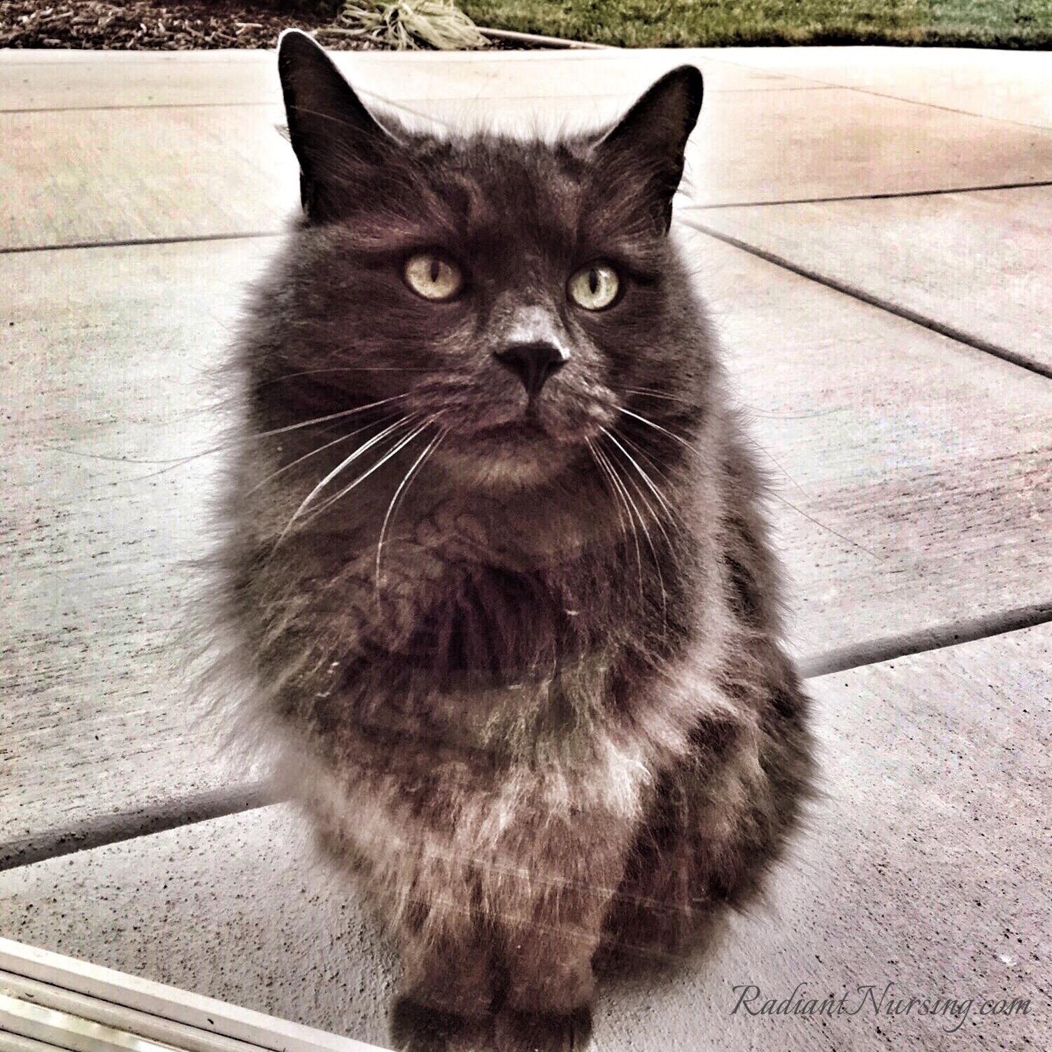 The neighbor kitty saying hello outside the sliding glass door.