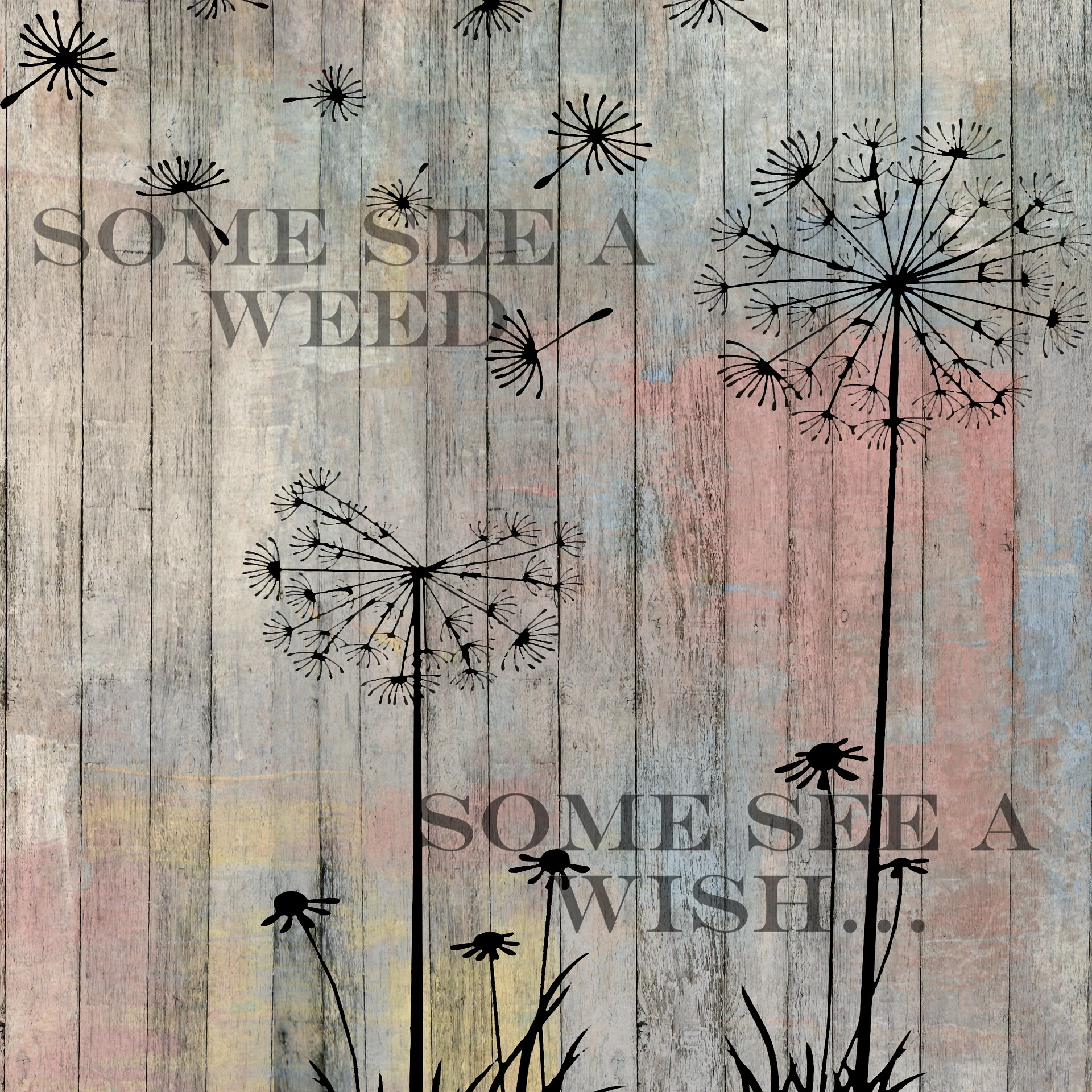 Some see a weed, some see a wish... Dandelions.