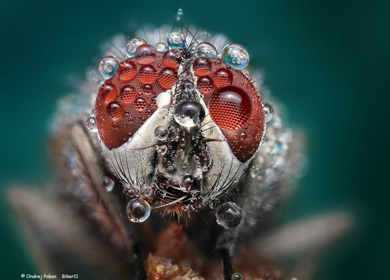 Morning dewdrops on a fly by Ondrej Pakan.
