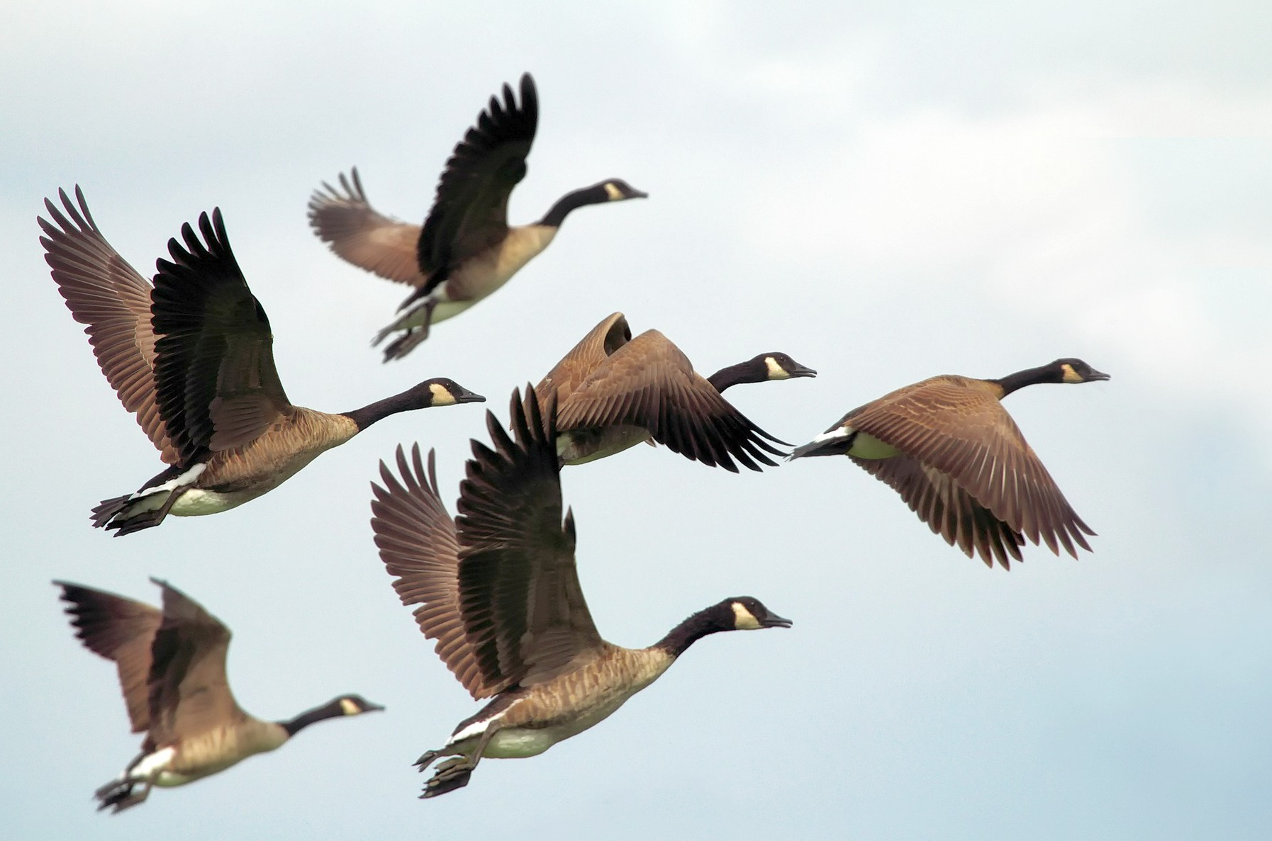 Flying geese held by the hand of God.