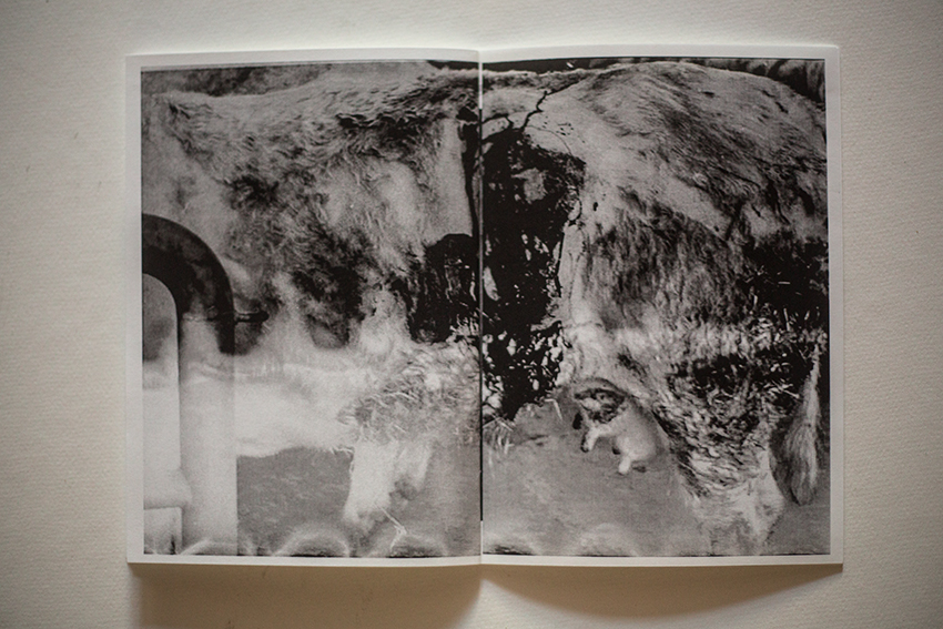 mort-aux-vaches-sebal-sebastien-alouf-ed-turbulent-p6.jpg