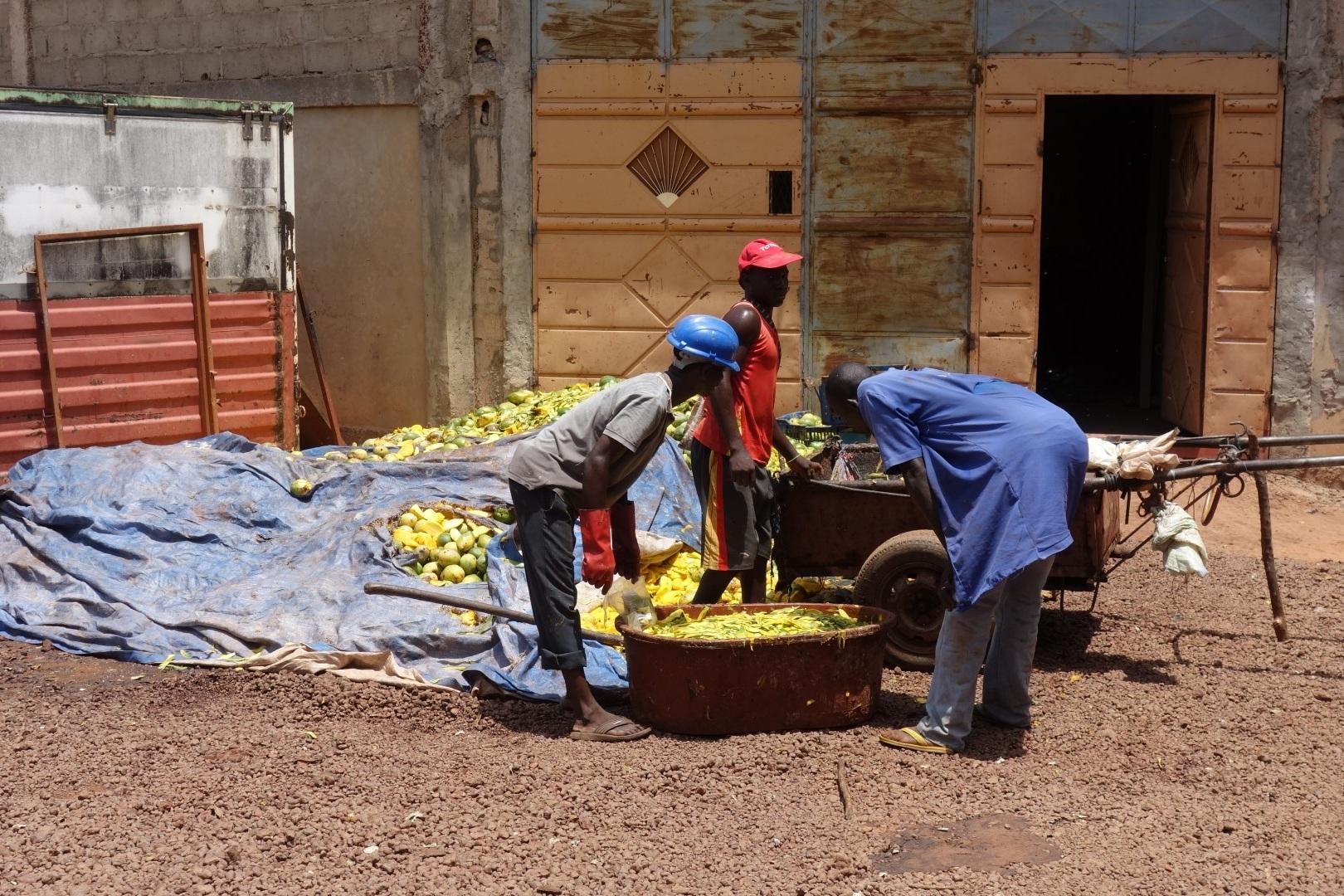 Veel ander fruit gaat hier ook verloren, tot meer dan 50%! Dat komt omdat we het nog niet lokaal kunnen verwerken. Verlies aan inkomen en veel onnodige Co2 uitstoot…. -