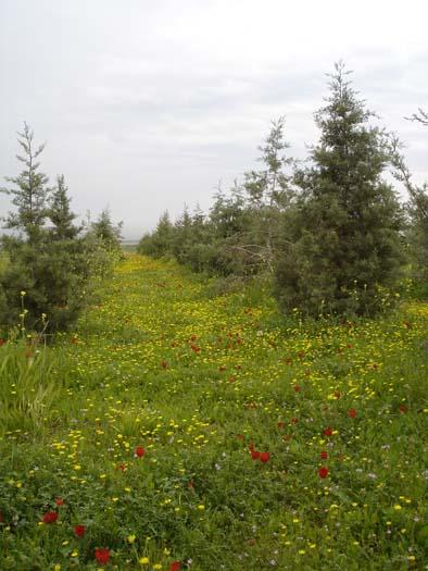 Spring near Aleppo.jpg