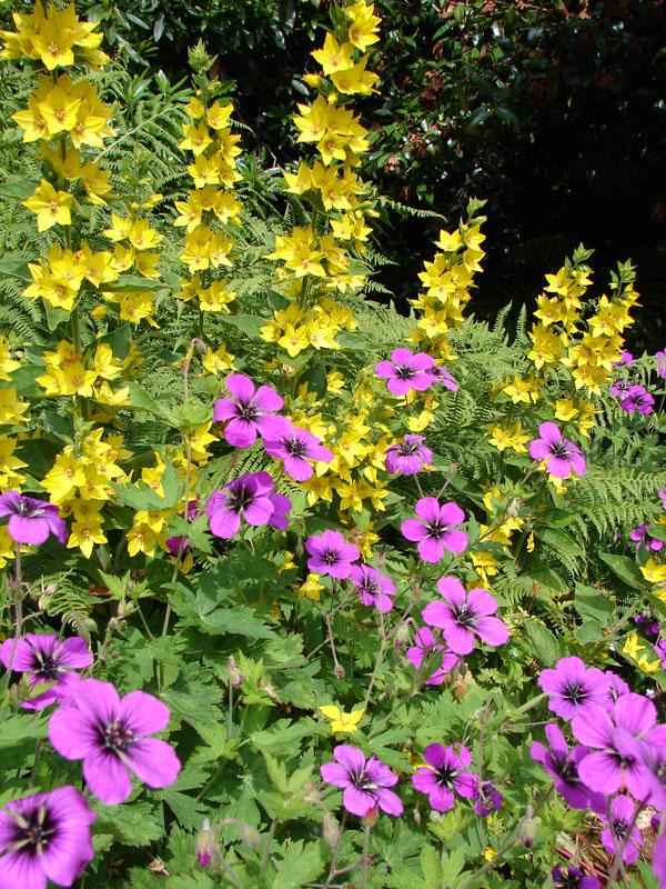Cathy Garden.jpg