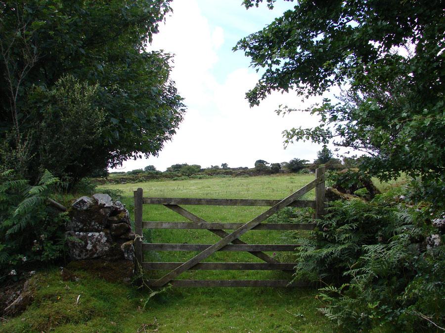 Field opposite Lower Tor.jpg