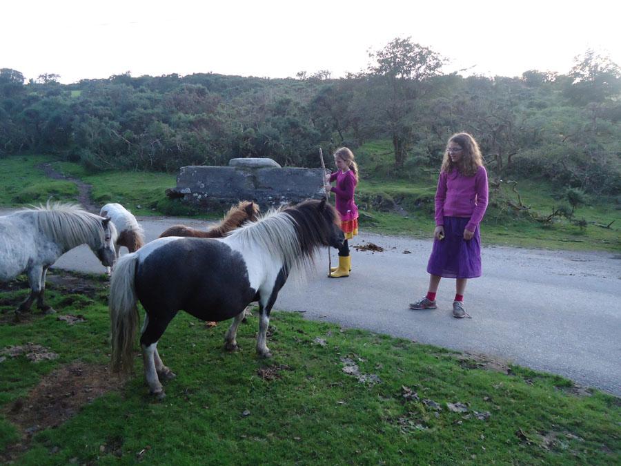 Horses on Road to  Carburrow from Warleggan.jpg