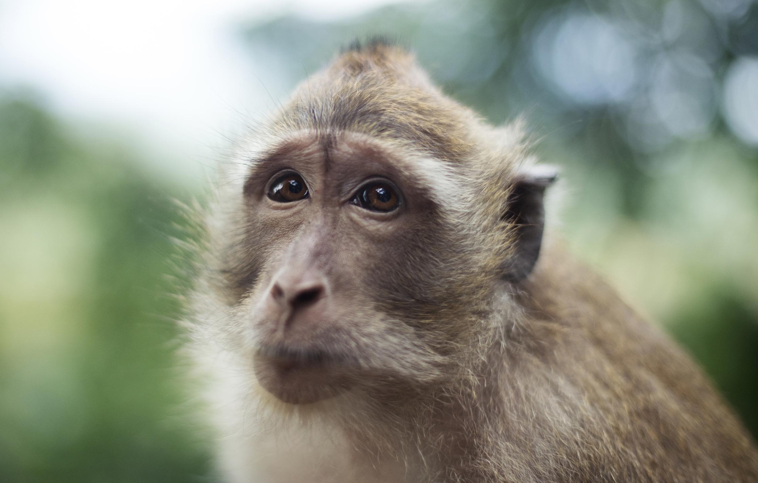 monkey_LR.jpg