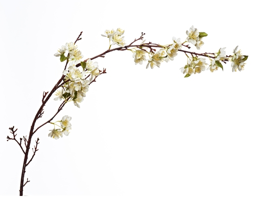 Neptune  - £19 - Apple Blossom Stem