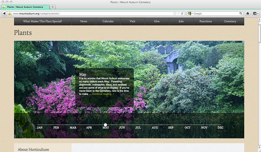 3_MAC_WEB_Plants.jpg