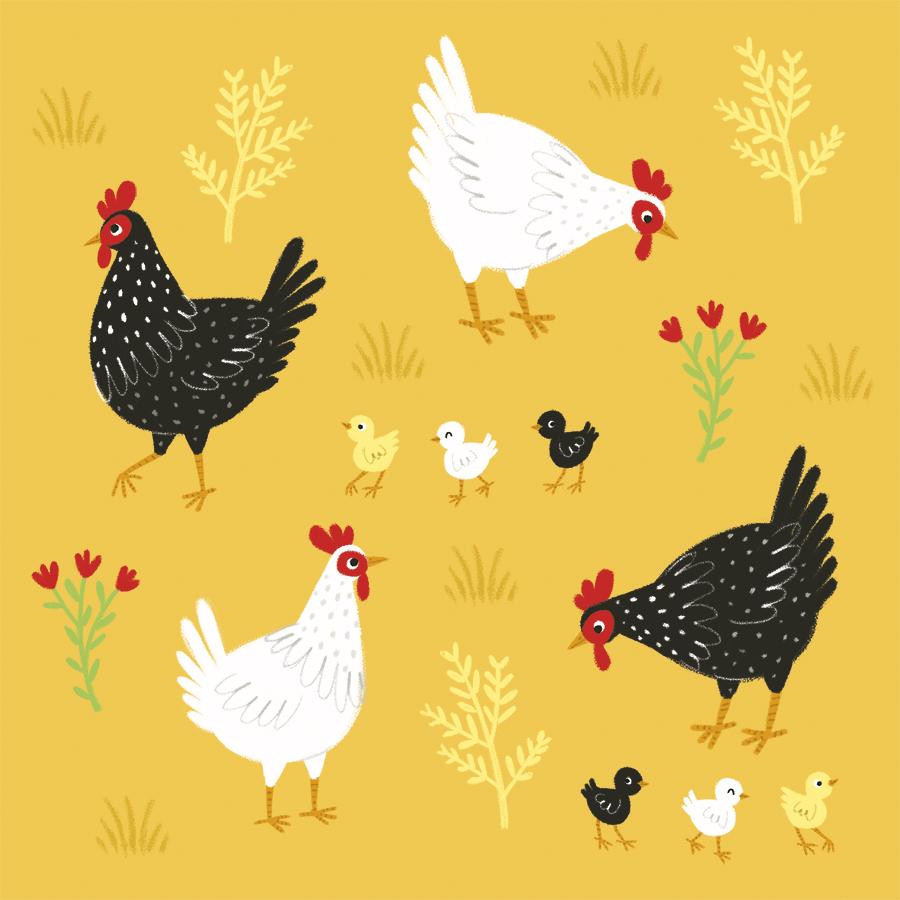 chickensweb.jpg