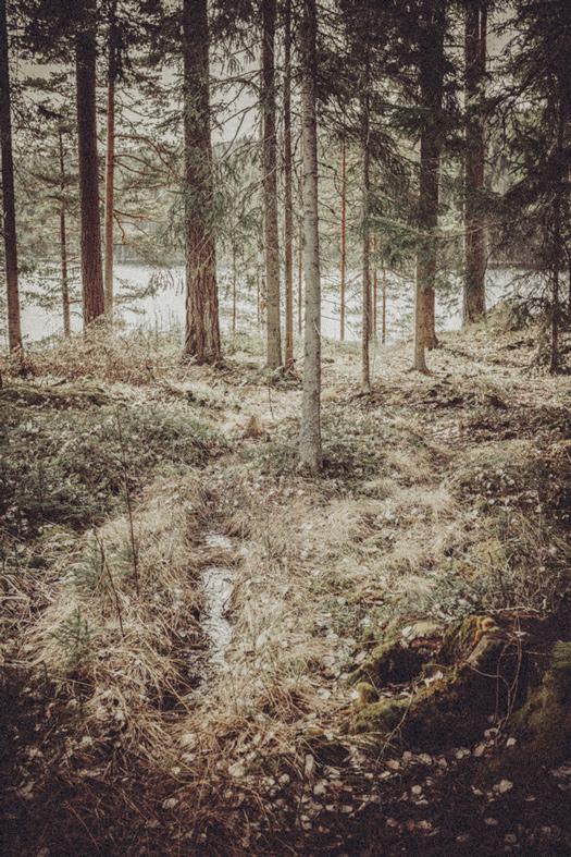Nature_10.jpg