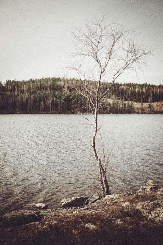 Nature_11.jpg