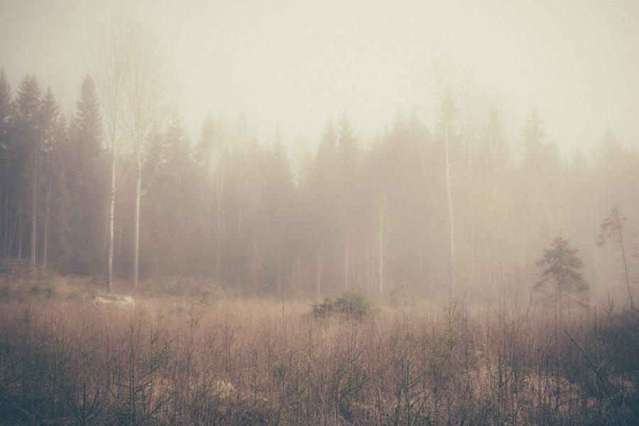 Nature_7_2.jpg