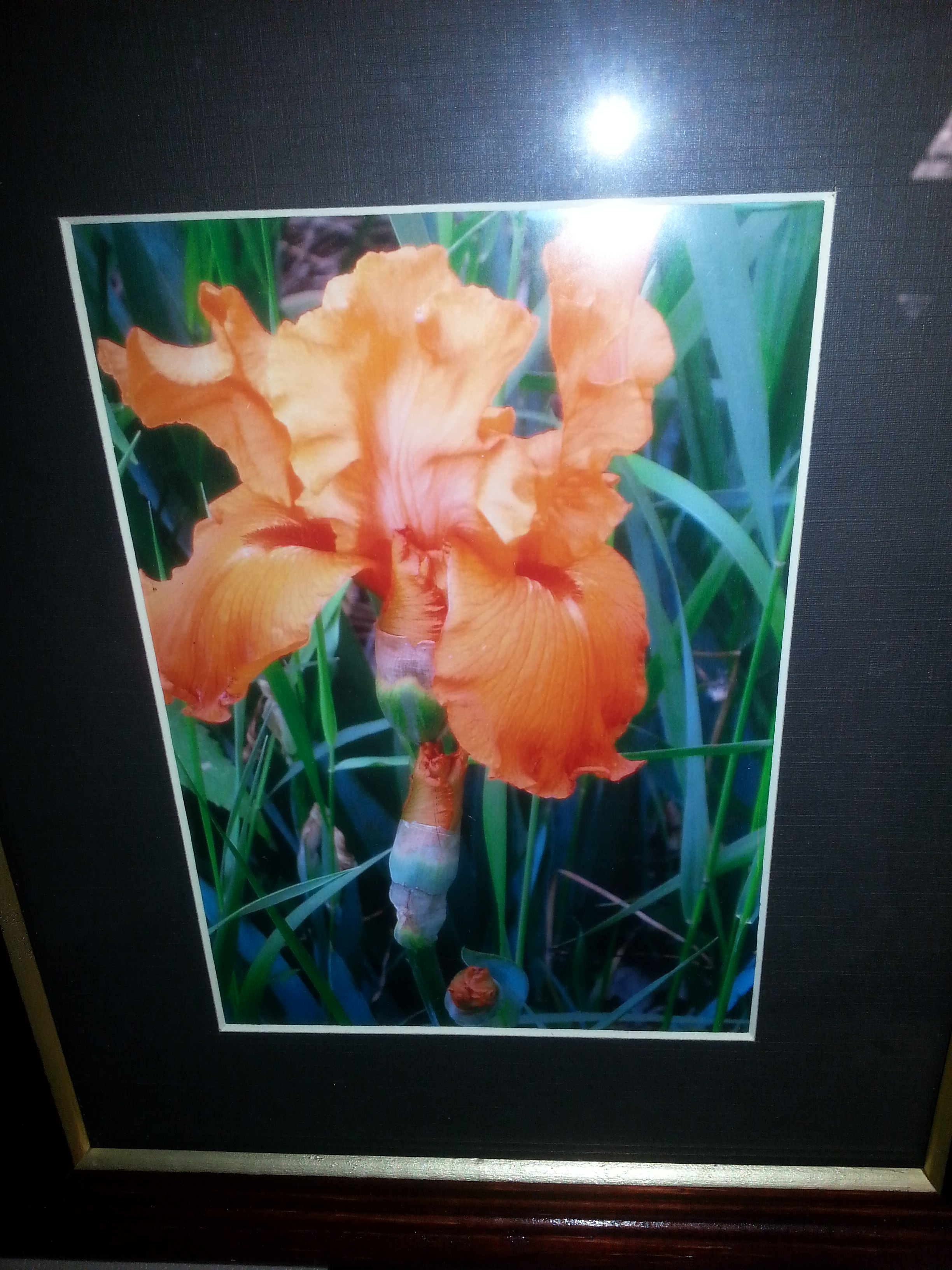 """Iris"" Photography by Dawn Johnson    Reserve: $20"