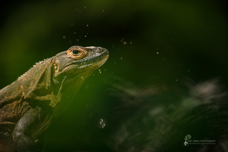 reptiles — Deep Green Photography