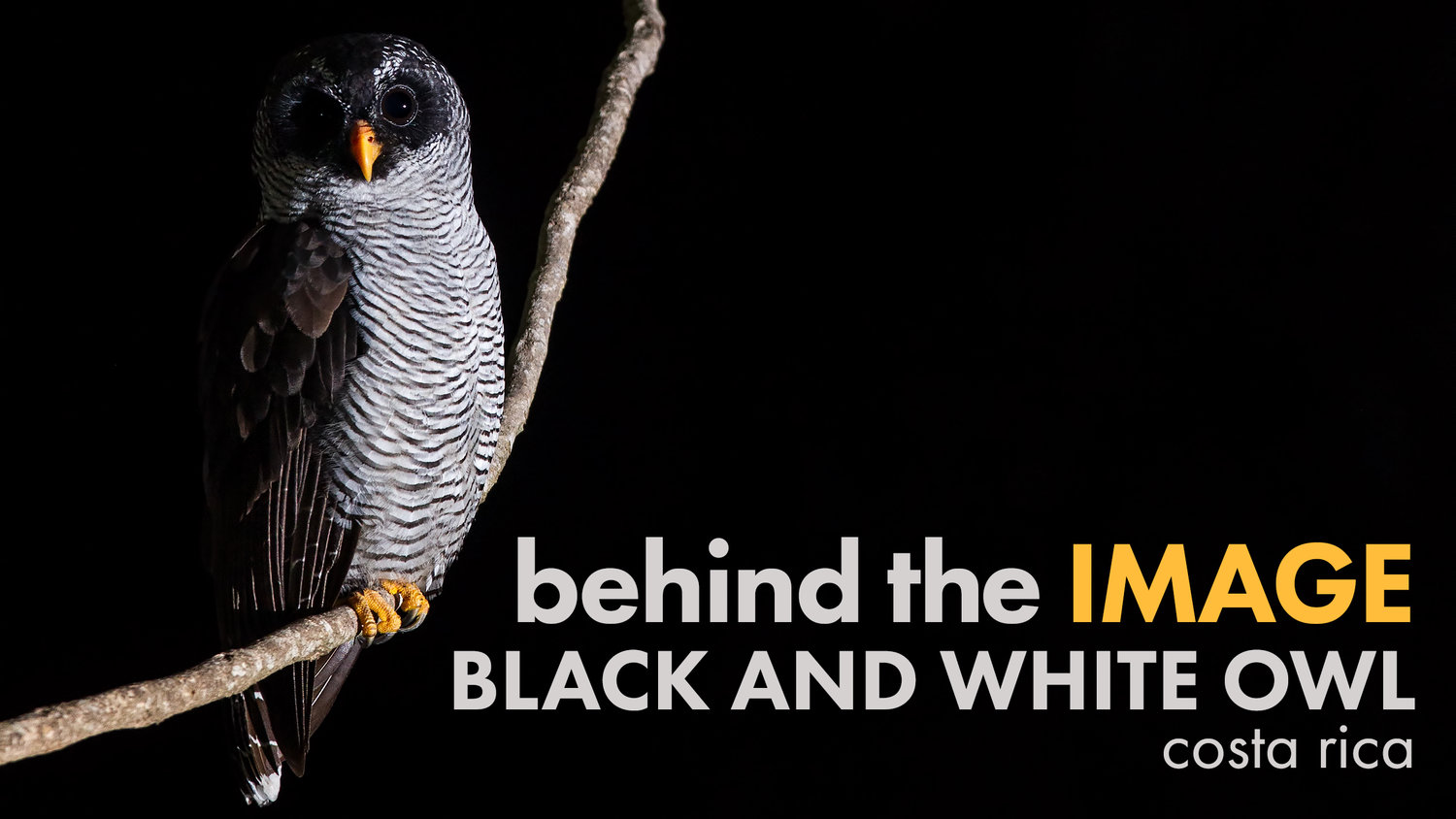 Behind the image black and white owl deep green photography