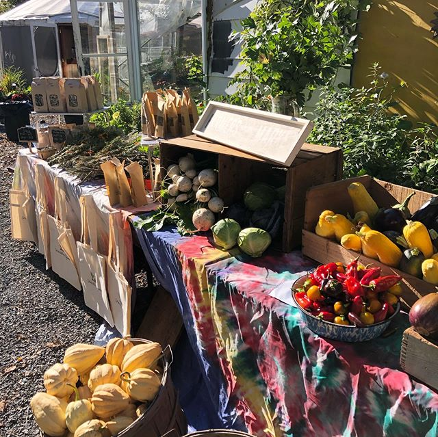 Cornerstone Organics hosted their second annual Fall Harvest Market this weekend and it was truly magical!🌻 ... Thanks to everyone who came out to celebrate the local bounty + harvest (and glorious weather!)☀️ ... Special thanks to @cornerstoneorganics Jaime + Matt, who opened up their beautiful property + farm (and their cool yurt!) once again for this special market full of outstanding local foods + makers, good vibes, lively music + community! 🍁 ... The only thing we love more than working with our bees + making honey, is sharing it with you all! 💛🐝 #hivetribe #supportlocal613