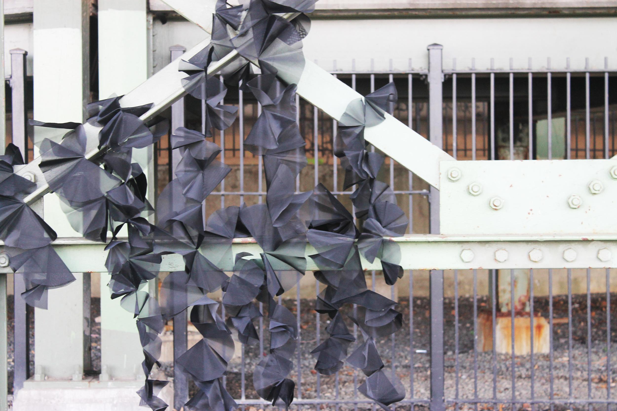 blackflower3.jpg
